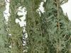 pic-2012.12.19-2